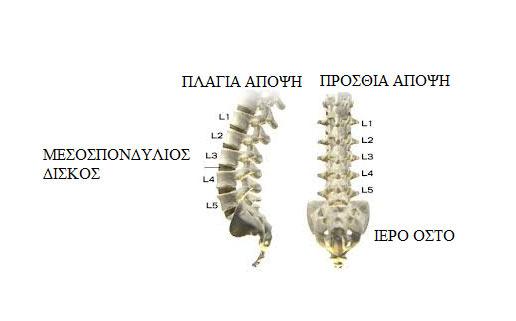 ΕΙΚΟΝΑ 1Α:Η οσφυϊκή μοίρα της σπονδυλικής στήλης (lumbar spine). Πλάγια άποψη (αριστερά) και πρόσθια άποψη (δεξιά)